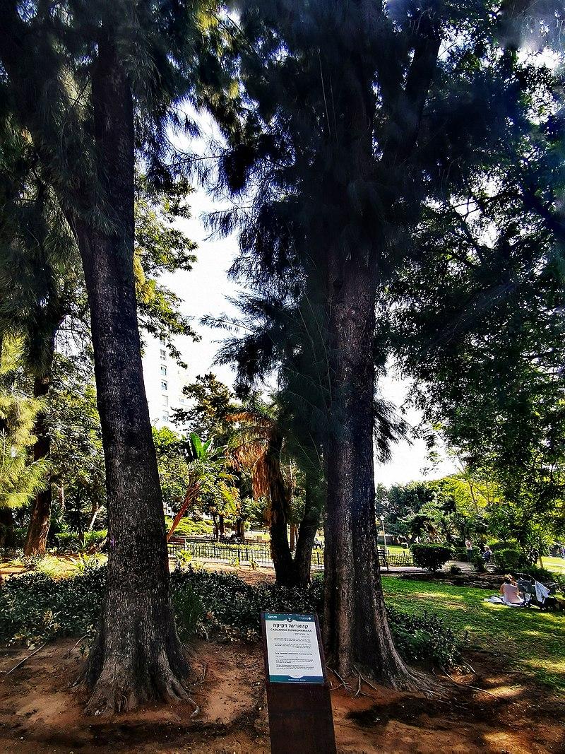 גן המושבה בראשון לציון