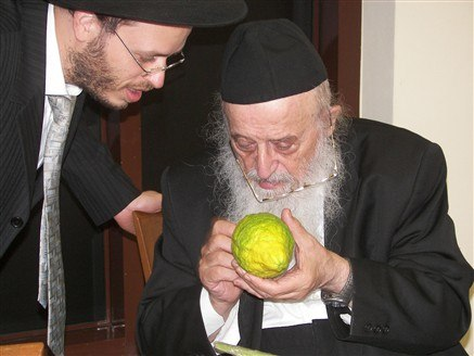 PikiWiki Israel 9435 Rabbi Bergman examines a students citron