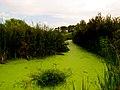 Pinckney Island National Wildlife Refuge (5957935005).jpg