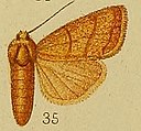 Pl.36-fig.35-Chabuata rufilinea Hampson, 1910.JPG