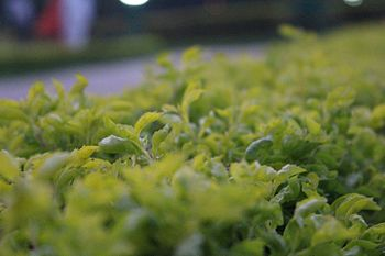 Plant Lovers @ Science City Kolkata.jpg