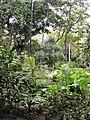 Plantes-Jardin-État-Réunion.JPG