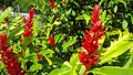 Plantlife in Dominica.jpg