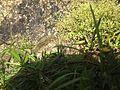 Plants (23).JPG