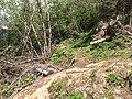 Plethora of fallen trees on Hiking Trail near Chamonix, France - panoramio (1).jpg
