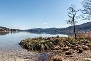 Poertschach Halbinselpromenade Uferzone mit Schilfrohr 08032017 6493.jpg