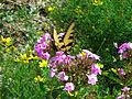 Pollinator 2.jpg