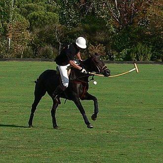 "The full-sized horses used for polo are called ""polo ponies,"" even though they are taller than ponies. Polo2.JPG"