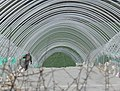 Polytunnels at Honey Hill - geograph.org.uk - 743576.jpg