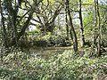 Pond by Sun oak - geograph.org.uk - 407279.jpg
