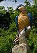 Porcelain figure Botanical Garden Munich Nymphenburg IMGP1520.jpg