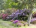 Powsin pan rododendrony1.jpg