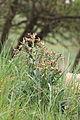 Pp strebovsky kopec 01 duben 20.jpg