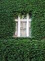 Praha, Dejvice - Wuchterlova 20 (okno).jpg