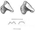 Premolars of Crocidura - ZooKeys-313-100-g008.jpeg