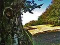 Prielohy - samorast - panoramio.jpg