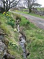Primroses and daffodils - geograph.org.uk - 397629.jpg