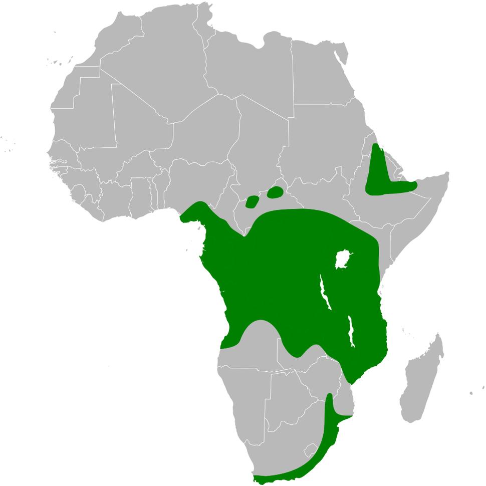 Psalidoprocne pristoptera distribution map