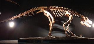 <i>Pseudhesperosuchus</i> genus of reptiles