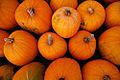 Pumpkins-2009.jpg