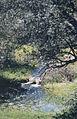 Río en Pedrezuela.jpg