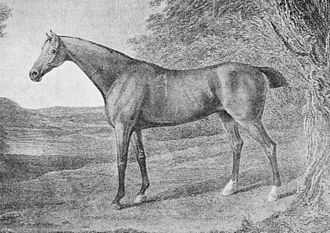 The mare Penelope (foaled 1798) produced two Derby winners, and established family 1-o, a branch of family 1. Her female line descendants established further branches over the following decades Racehorse Penelope.jpg