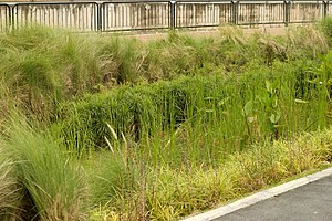 Low-impact development (U.S. and Canada) - Rain garden