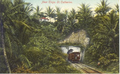 Rear of a train entering a tunel near Troja, St Catherine, Jamaica c1896.png