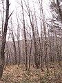 Rebollar en invierno5.jpg