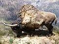 Reconstitution d'un bison d'Europe 1.jpg