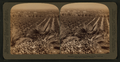 Redlands and its wealth of Orange Groves, California, from Robert N. Dennis collection of stereoscopic views.png