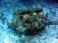 Reef3701 - Flickr - NOAA Photo Library.jpg