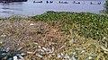 Rejets polluants dans la ville de Douala 23.jpg