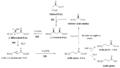 Resumen síntesis de ácidos grasos.png