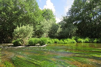 Riberas del río Tera 2.jpg