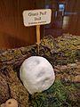Richardson Nature Center 02.jpg