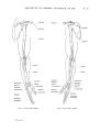Richer - Anatomie artistique, 2 p. 32.png