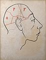 Right profile of head with depressed frontal lobes, divided Wellcome V0009519EL.jpg