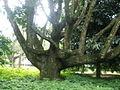 Rio de Janeiro Botanical Garden 13.JPG