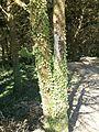 """Riserva Naturale Orientata """"Monte Bonifato"""" (Alcamo) 08.jpg"""