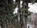 Rishikesh haridwsurkanda deviar (218).JPG