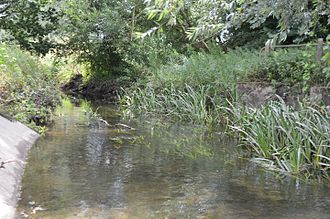 River Brain - River Brain in Whet Mead, a Local Nature Reserve in Witham in Essex