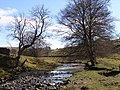 River South Tyne - geograph.org.uk - 158367.jpg