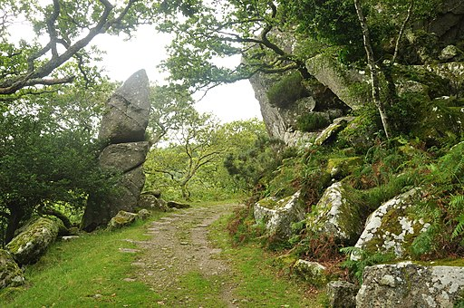 Rock outcrop and tramway in Dewerstone Wood (5164)