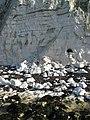 Rockfalls near Portobello - geograph.org.uk - 1204981.jpg
