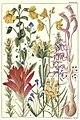 Rocky mountain flowers (Plate 22) (6279687785).jpg