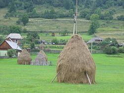 Romanian Hay 050820-163526.jpg