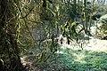 Rombergpark-100331-11472-Baum-am-Bachlauf.jpg