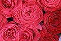 Rose, Rosa.JPG