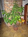 Rostlina 8321.jpg